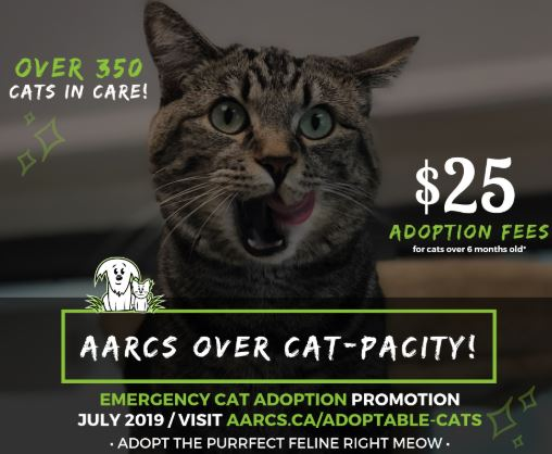 Pets Of YYC: AARCS Over Cat-Pacity Event - URBA Today